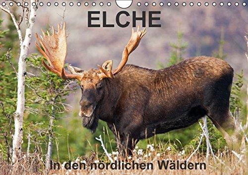 9783664146093: ELCHE In den nördlichen Wäldern (Wandkalender 2016 DIN A4 quer): Begleiten wir den Elch in dennördlichen Wäldern von Quebec. Philippe Henry ... stillen Riesen. (Monatskalender, 14 Seiten)