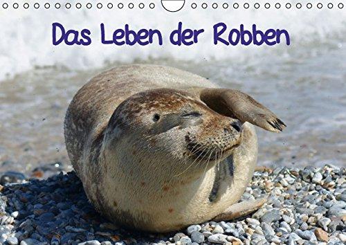 9783664157822: Das Leben der Robben (Wandkalender 2016 DIN A4 quer)
