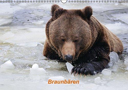 9783664161256: Braunbären (Wandkalender 2016 DIN A3 quer): Europäischer Braunbär (Monatskalender, 14 Seiten)
