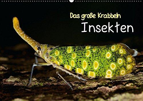 9783664163274: Das große Krabbeln: Insekten (Wandkalender 2016 DIN A2 quer): Auf sechs Füßen um die Welt (Monatskalender, 14 Seiten)