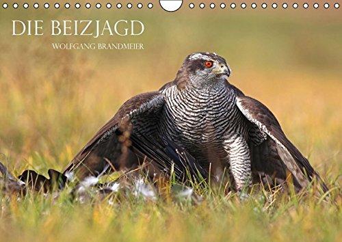 9783664178162: Die Beizjagd (Wandkalender 2016 DIN A4 quer): Falknerei und Beizjagd in Perfektion (Monatskalender, 14 Seiten)