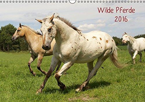 9783664179503: Wilde Pferde (Wandkalender 2016 DIN A3 quer): zauberhafte Wesen begleiten uns durch das Jahr (Monatskalender, 14 Seiten)