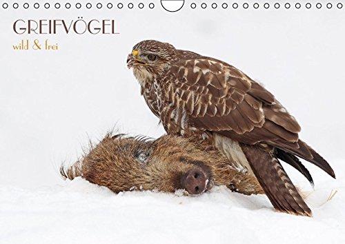 9783664185481: GREIFVÖGEL wild & frei (Wandkalender 2016 DIN A4 quer): Greifvögel in faszinierenden Bildern (Monatskalender, 14 Seiten)