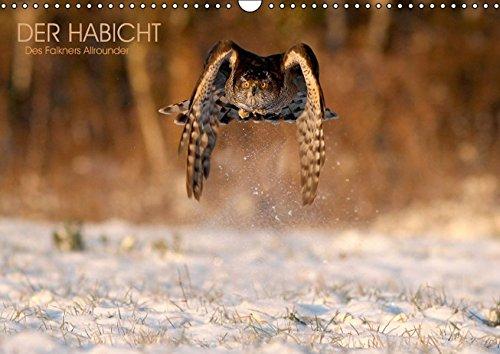 9783664190515: DER HABICHT, Des Falkners Allrounder (Wandkalender 2016 DIN A3 quer): Der Habicht in spektakulären Szenen (Monatskalender, 14 Seiten)