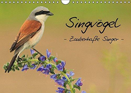 9783664192359: Singvögel - Zauberhafte Sänger (Wandkalender 2016 DIN A4 quer)