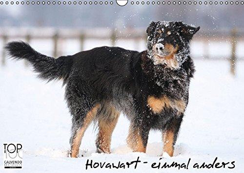 9783664276226: Hovawarte - einmal anders (Wandkalender 2016 DIN A3 quer): Hovawarte - Hunde mit vielen Gesichtern (Monatskalender, 14 Seiten)