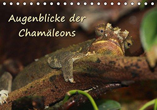 9783664281985: Augenblicke der Cham�leons (Tischkalender 2016 DIN A5 quer): Augenblicke aus dem Leben von Cham�leons (Monatskalender, 14 Seiten)