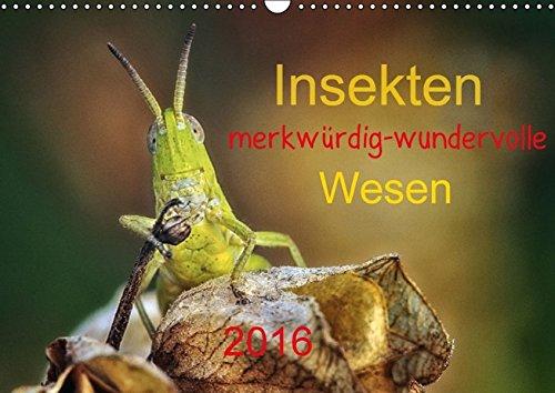 9783664309245: Insekten, merkwürdig-wundervolle Wesen 2016 - Wandkalender 2016