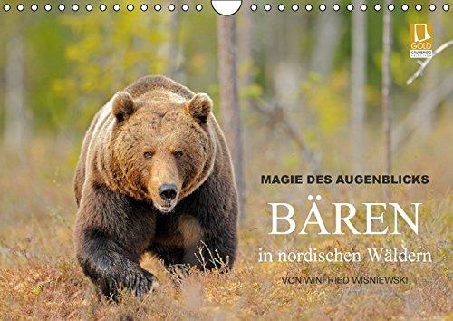 9783664334469: Magie des Augenblicks - Bären in nordischen Wäldern (Wandkalender 2016 DIN A4 quer): Eindrucksvolle Bildern von den charismatischen Raubtieren, ... Wisniewski (Monatskalender, 14 Seiten)