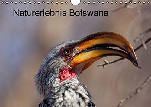 9783664336210: Naturerlebnis Botswana (Wandkalender 2016 DIN A4 quer): Eindrücke aus dem Chobe Park und dem Okavango Delta (Monatskalender, 14 Seiten)