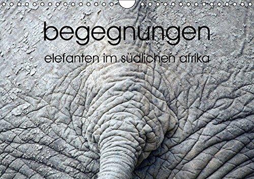 9783664348244: begegnungen - elefanten im südlichen afrika (Wandkalender 2016 DIN A4 quer): elefantenbeobachtung (Monatskalender, 14 Seiten)