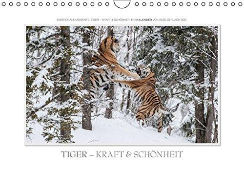 9783664352982: Emotionale Momente: Tiger - Kraft & Schönheit. (Wandkalender 2016 DIN A4 quer): Ingo Gerlach GDT hat die schönsten Bilder vom Tiger für diesen Kalender zusammengestellt. (Monatskalender, 14 Seiten)