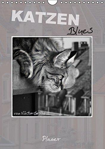 9783664353101: Katzen Blues / Planer (Wandkalender 2016 DIN A4 hoch): Norwegische Waldkatzen - über den Dächern von Münster (Planer, 14 Seiten)