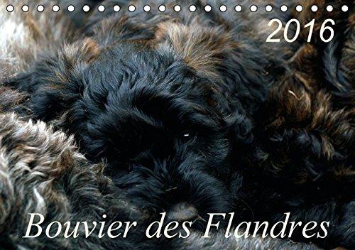 9783664361670: Bouvier des Flandres (Tischkalender 2016 DIN A5 quer): Bouvier des Flandres - Kamerad, Freund und Kumpel (Monatskalender, 14 Seiten)