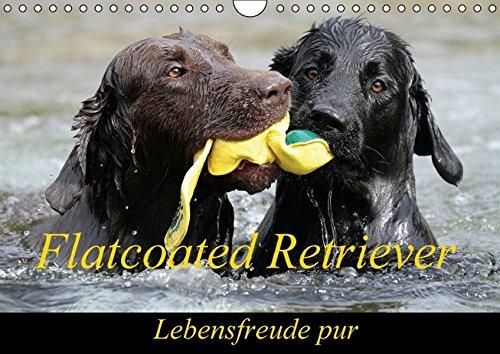 9783664367849: Flatcoated Retriever (Wandkalender 2016 DIN A4 quer)