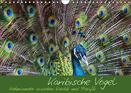 9783664373147: Karibische Vögel - Naturwunder zwischen Karibik und Pazifik (Wandkalender 2016 DIN A4 quer): Ein schöner Monatskalender mit karibischen bunten Vögeln. (Monatskalender, 14 Seiten)