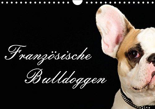 9783664374168: Französische Bulldoggen (Wandkalender 2016 DIN A4 quer)