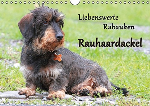 9783664376667: Liebenswerte Rabauken Rauhaardackel / CH-Version (Wandkalender 2016 DIN A4 quer): Rauhaardackel sind einfach liebenswerte Rabauken (Monatskalender, 14 Seiten)
