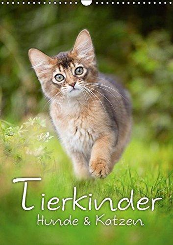 9783664381869: Tierkinder Hunde und Katzen (Wandkalender 2016 DIN A3 hoch): Schöner Tierkinder Kalender mit Hunde- und Katzenkindern (Monatskalender, 14 Seiten)
