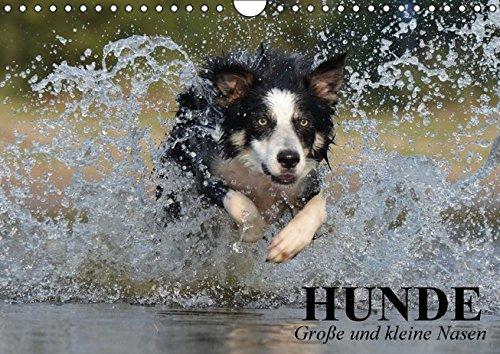 9783664396986: Hunde. Gro�e und kleine Nasen (Wandkalender 2016 DIN A4 quer): Lustige und niedliche Hundebilder zum schmunzeln! (Geburtstagskalender, 14 Seiten)