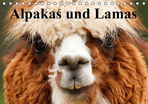 9783664411566: Alpakas und Lamas (Tischkalender 2016 DIN A5 quer): Genügsame Neuweldkameliden aus Südamerika (Monatskalender, 14 Seiten)