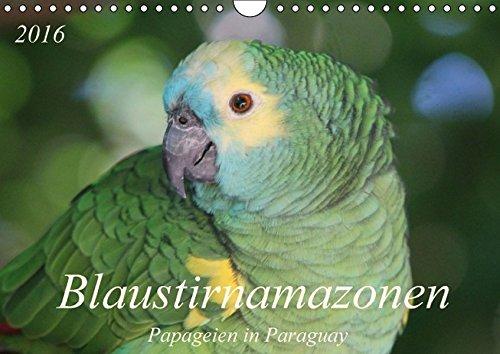 9783664421275: Blaustirnamazonen - Papageien in Paraguay (Wandkalender 2016 DIN A4 quer): Zahm, aber frei! (Monatskalender, 14 Seiten)