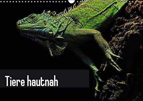 9783664444595: Tiere hautnah (Wandkalender 2016 DIN A3 quer): Glasklare Tierportraits quer durch die Fauna (Monatskalender, 14 Seiten)