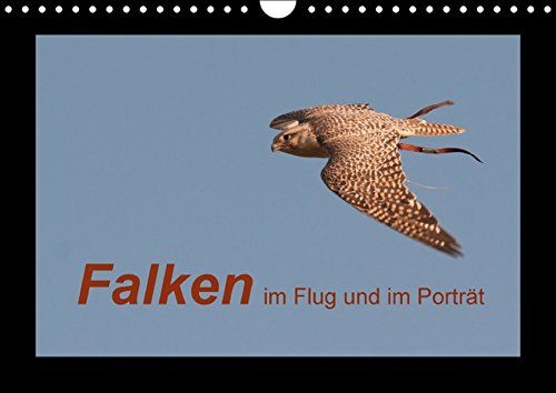 9783664450640: Falken im Flug und im Porträt (Wandkalender 2016 DIN A4 quer): Die schnellsten Greifvögel der Welt (Monatskalender, 14 Seiten)