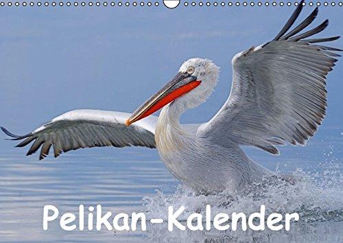 9783664456178: Pelikan-Kalender - Wandkalender 2016