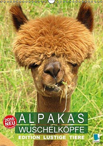 9783664467945: Alpakas: Wuschelköpfe - Edition lustige Tiere (Wandkalender 2016 DIN A3 hoch): Alpakas: Wollige Kleinkamele im Porträt (Monatskalender, 14 Seiten)