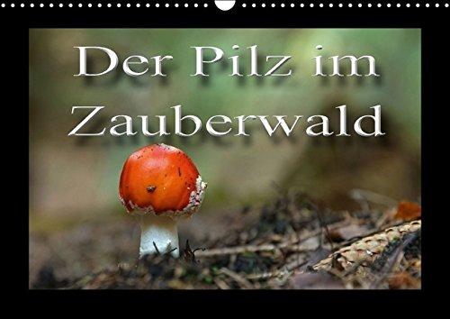 9783664493258: Der Pilz im Märchenwald (Wandkalender 2016 DIN A3 quer): Lanschaft wie im Zauberwald und darin geheimnisvolles Leben - wie z. B. unsere Waldpilze. (Monatskalender, 14 Seiten)
