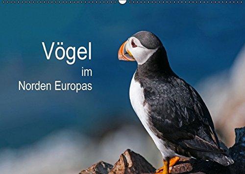 9783664493920: Vögel im Norden Europas (Wandkalender 2016 DIN A2 quer): Beeindruckende Bilder über die faszinierende Vogelwelt in Skandinavien (Monatskalender, 14 Seiten)