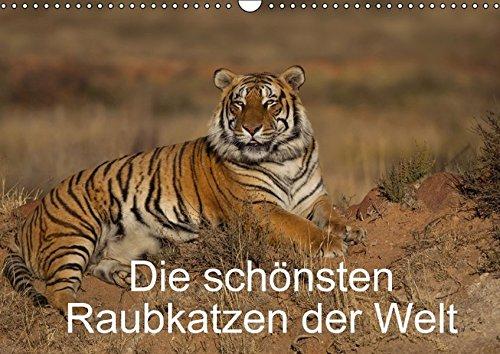 9783664500413: Die sch�nsten Raubkatzen der Welt (Wandkalender 2016 DIN A3 quer): Bilder von den sch�nsten Raubkatzen, dem Gepard, dem Leopard, dem L�we und dem Tiger. (Monatskalender, 14 Seiten)