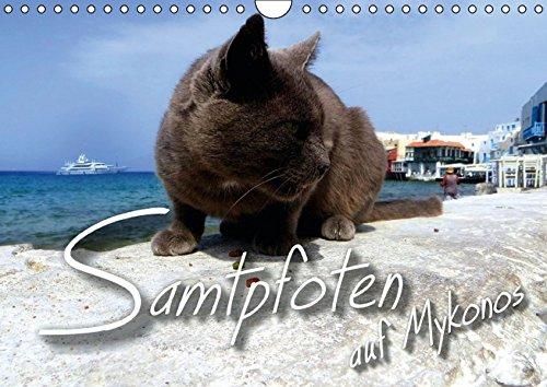 9783664517466: SAMTPFOTEN auf Mykonos (Wandkalender 2016 DIN A4 quer): Inselkatzen fotografiert vor landestypischen Kulissen. (Monatskalender, 14 Seiten)
