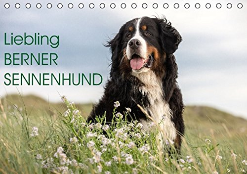 9783664523726: Liebling BERNER SENNENHUND (Tischkalender 2016 DIN A5 quer): Ihre Sch�nheit und Gutm�tigkeit macht die Schweizer B�ren so beliebt (Monatskalender, 14 Seiten)