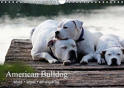 9783664526840: American Bulldog - stolz, loyal, einzigartig (Wandkalender 2016 DIN A4 quer)