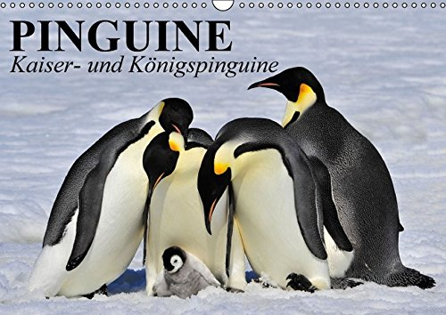 9783664532872: Pinguine - Kaiser- und Königspinguine (Wandkalender 2016 DIN A3 quer): Im Sonntagsfrack durch Eis und Schnee (Geburtstagskalender, 14 Seiten)