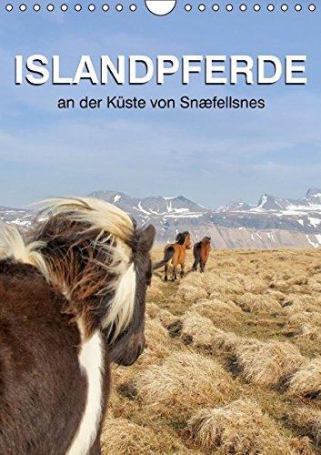 9783664535552: ISLANDPFERDE an der Küste von Snæfellsnes (Wandkalender 2016 DIN A4 hoch): Islandpferde in Island (Planer, 14 Seiten)