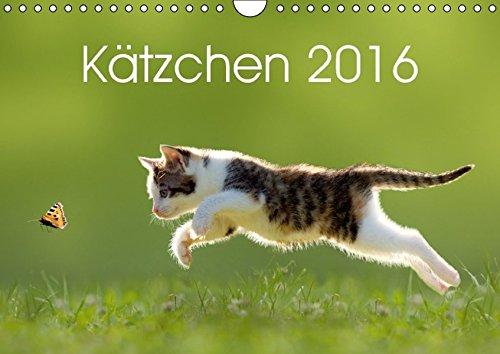 9783664551859: Kätzchen 2016 (Wandkalender 2016 DIN A4 quer): Katzenkalender mit abwechslungsreichen und stimmungsvoll gestalteten Bildern passend zur Jahreszeit. (Monatskalender, 14 Seiten)