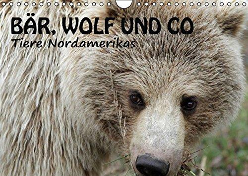 9783664567768: Bär, Wolf und Co - Tiere Nordamerikas (Wandkalender 2016 DIN A4 quer): Unwiederbringliche Momente mit wilden Tieren (Monatskalender, 14 Seiten)