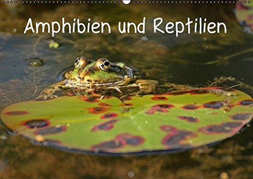 9783664579860: Amphibien und Reptilien (Wandkalender 2016 DIN A2 quer): Neun verschiedene mitteleuropäische Reptilien- und Amphibienarten (Monatskalender, 14 Seiten)