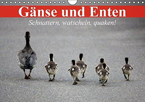 9783664581719: Gänse und Enten. Schnattern, watscheln, quaken! (Wandkalender 2016 DIN A4 quer): Schöne Wasservögel und bezaubernde Küken (Monatskalender, 14 Seiten)