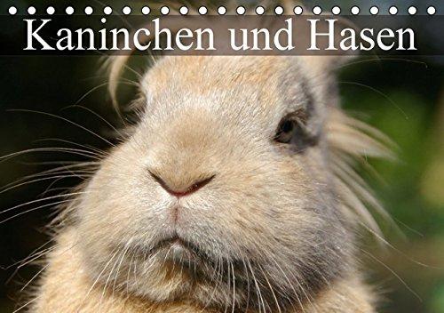 9783664589302: Rabbit Rabbit Desk Calendar 2014A5Landscape): Cute Fluffy Fur (14Pages Monthly Desk Pad Calendar) (CALVENDO Guys Animals)