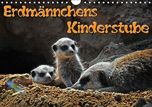 9783664610419: Erdmännchens Kinderstube (Wandkalender 2016 DIN A4 quer)