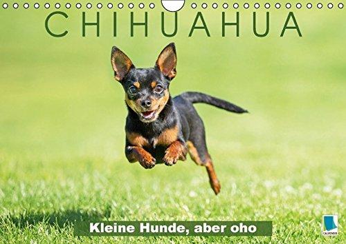 9783664629510: Chihuahua: Kleine Hunde, aber oho (Wandkalender 2016 DIN A4 quer): Chihuahua: Die kleinste Hunderasse der Welt (Monatskalender, 14 Seiten)