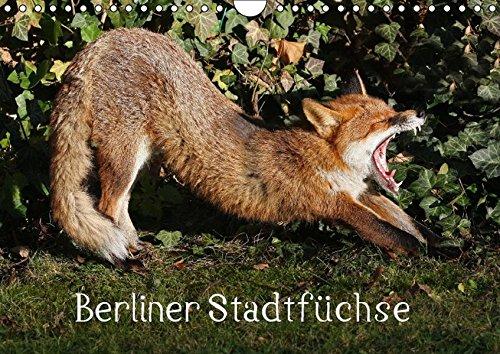 9783664643981: Berliner Stadtf�chse (Wandkalender 2016 DIN A4 quer): Stadtf�chse in Berlin (Monatskalender, 14 Seiten)