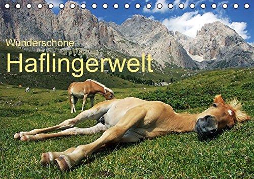 9783664648412: Wunderschöne Haflingerwelt (Tischkalender 2016 DIN A5 quer)