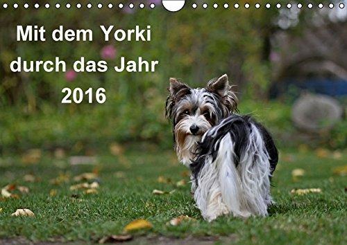 9783664652082: Mit dem Yorki durch das Jahr 2016 (Wandkalender 2016 DIN A4 quer): Golddust und Biewer Yorkshire Terrier (Monatskalender, 14 Seiten)