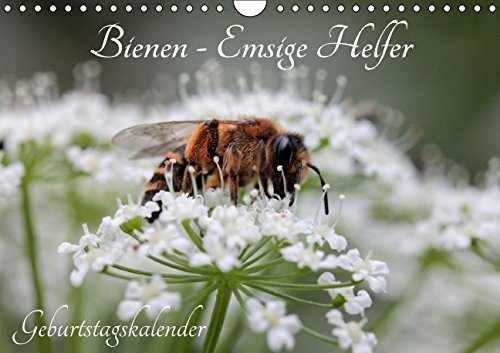 9783664666195: Bienen - Emsige Helfer (Wandkalender immerwährend DIN A4 quer): Faszinierende Nahaufnahmen der kleinen Nützlinge (Geburtstagskalender, 14 Seiten)