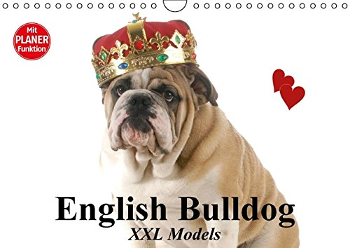 9783664698851: English Bulldog XXL Models (Wandkalender 2016 DIN A4 quer): Starke Bulldoggen Models in